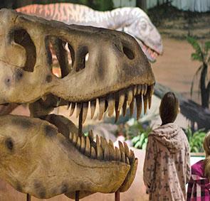 dinosaur isle rainy days